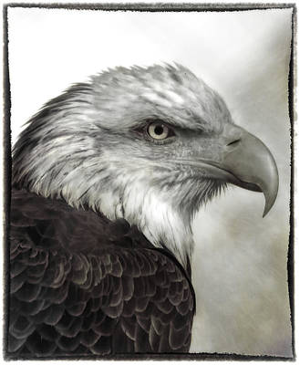 Photograph - Eagle Protrait by Elaine Malott