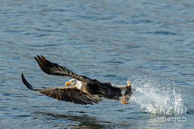 Photograph - Eagle Season  by Beve Brown-Clark Photography