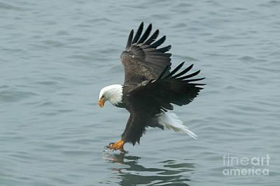 Photograph - Eagle Season Ix by Beve Brown-Clark Photography