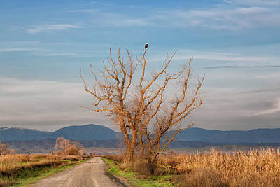 Photograph - Eagle Watch by Kathleen Bishop