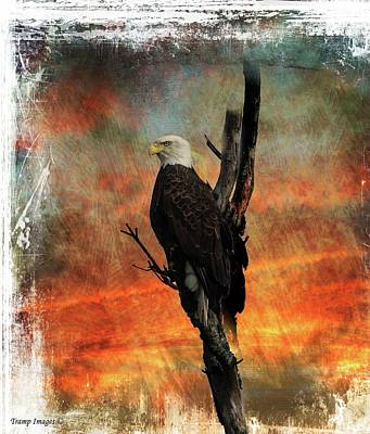 Digital Art - Eagle by Wesley Nesbitt