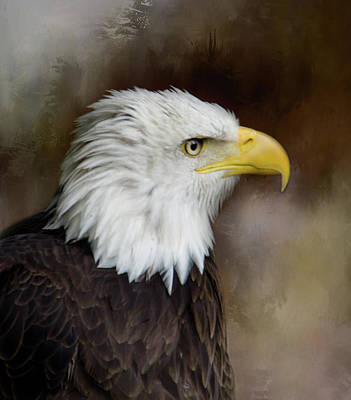 Photograph - Eagle Eye by Marilyn Wilson