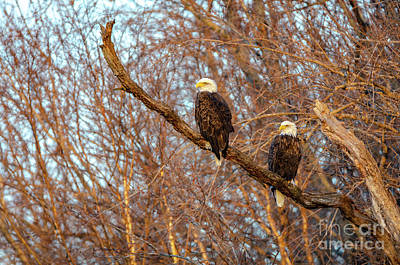Photograph - Eagles Watching The Sunset by Steven Santamour