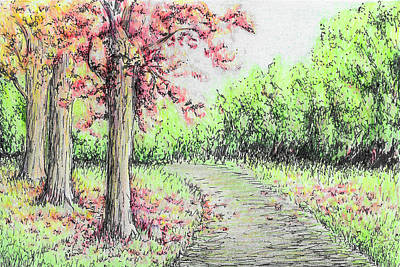 Drawing - Early Autumn by Sipporah Art and Illustration