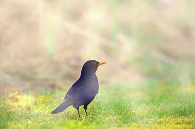 Photograph - Early Bird by Jason Fink