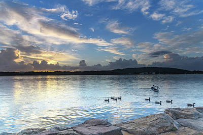 Photograph - Early Morning Bay Waterscape With Ducks And Pelicans by Merrillie Redden