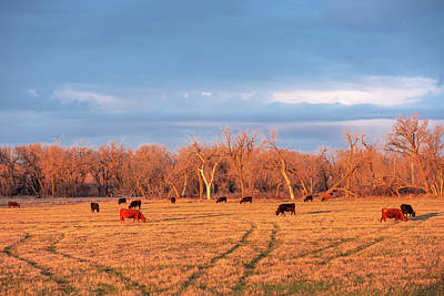 Photograph - Early Morning Herd by Todd Klassy