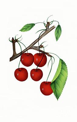 Nikki Vig Digital Art - Early Richmond Cherries by Nikki Vig