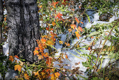 Photograph - Early Snow by Philip Rispin