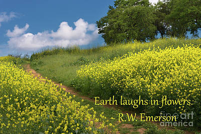 Kim Fearheiley Photography - Earth Laughs In Flowers, No. 6 by Glenn Franco Simmons