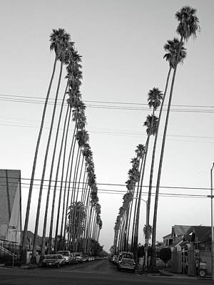 Photograph - East La Palm Trees  by Hold Still Photography