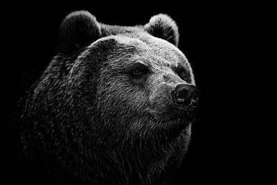 Photograph - East Siberian Brown Bear by © Christian Meermann