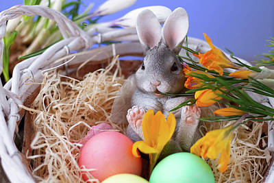 Photograph - Easter Bunny by Christine Sponchia
