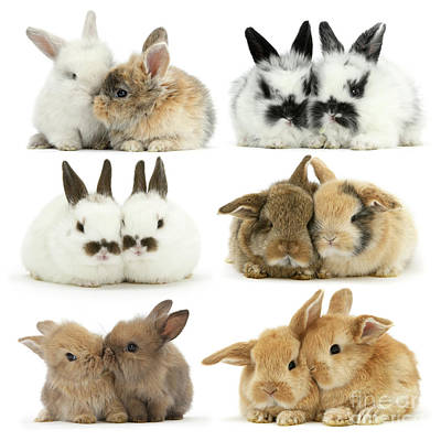 Photograph - Easter Love Bunnies by Warren Photographic
