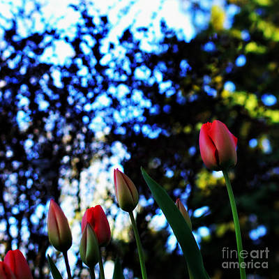 Frank J Casella Royalty-Free and Rights-Managed Images - Easter Sunday Silence by Frank J Casella
