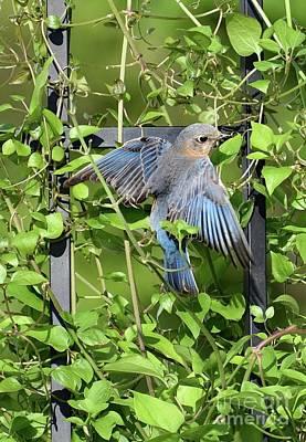 Kids Cartoons - Eastern Bluebird Hanging On by Cindy Treger