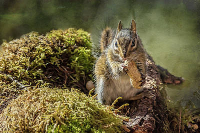 Photograph - Easy Pickings For My Neighbor-the Chipmunk by Belinda Greb
