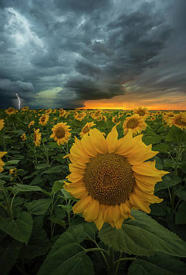 Art Print featuring the photograph Eccentric  by Aaron J Groen