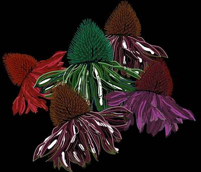 Echinacea Flowers With Black Art Print