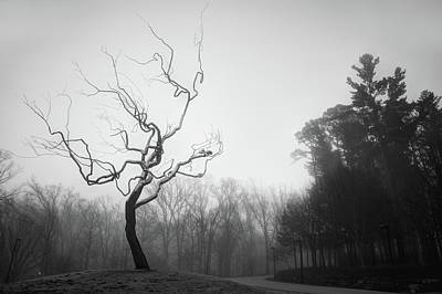 Photograph - Eerie Tree Foggy Morning - Monochrome by Gregory Ballos