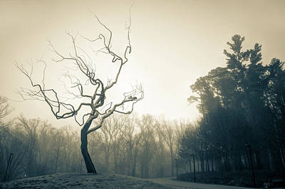 Photograph - Eerie Tree Foggy Morning - Sepia by Gregory Ballos