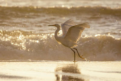 Photograph - Egret At The Beach On A Sunny Morning by Steven Sparks