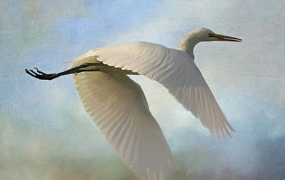 Photograph - Egret In The Clouds by HH Photography of Florida