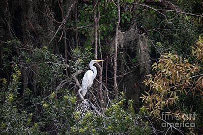 Photograph - Egret Perch - Lowcountry Marsh  by Dale Powell