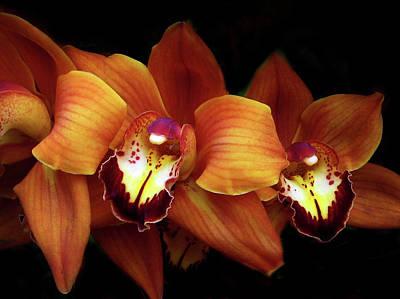 Photograph - Orange Cimbidium Orchid by Jessica Jenney