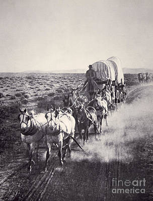 Photograph - Eight Horse Heavy Freight Wagon by American School