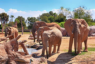 Photograph - Ele-phants by Chris Smith