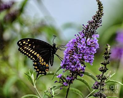 Michael Jackson - Elegant Black Swallowtail Butterfly by Cindy Treger