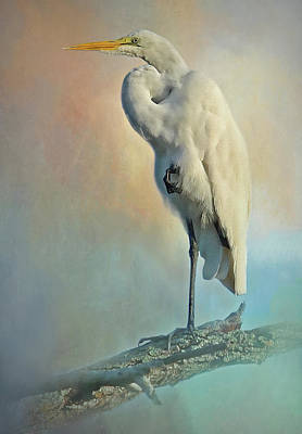 Photograph - Elegant Egret by HH Photography of Florida