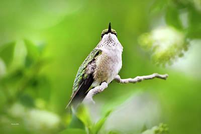 Photograph - Elegant Hummingbird by Christina Rollo