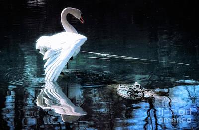 Photograph - Elegant Swan by Elaine Manley