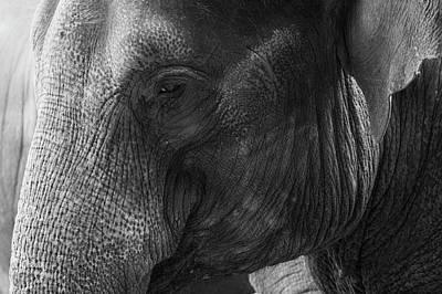 Elephant Art Print by Andrew Dernie