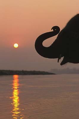 Elephant, Chitwan National Park, Nepal Art Print by Design Pics / Sean White