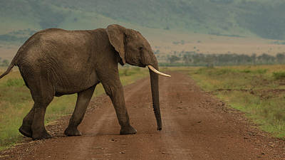 Photograph - Elephant Crossing the road by Jwngshar Narzary