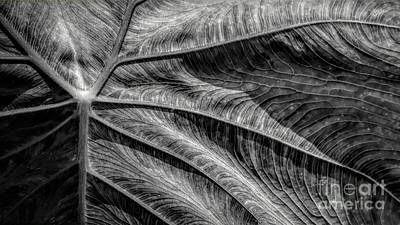 Easter Bunny - Elephant Ear Leaf in Macro by Mike Nellums
