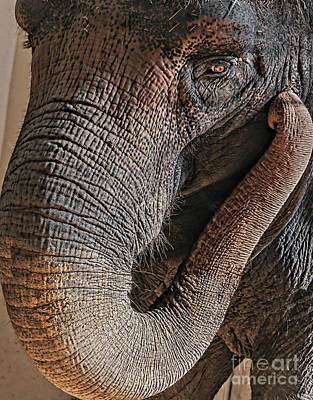 Photograph - Elephant Eyelashes by Cathy Donohoue