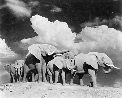 Animal Family Photograph - Elephant Herd by Three Lions