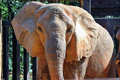 Photograph - Elephant by Lisa Wooten