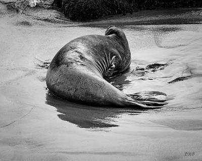 Photograph - Elephant Seal X Bw by David Gordon
