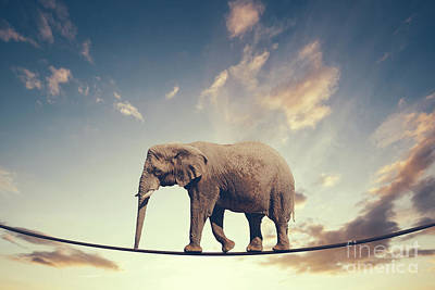 Photograph - Elephant Walking On A Line On The Sky Background. by Michal Bednarek