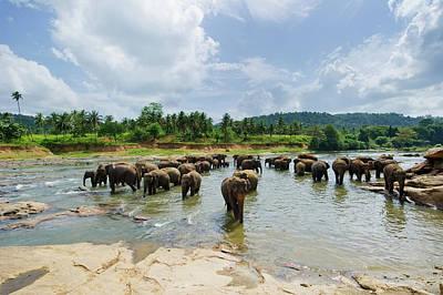 Photograph - Elephants At Pinnawela - Sri Lanka by Extreme-photographer