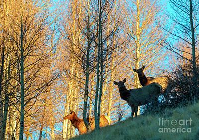 Photograph - Elk Herd In The Rockies by Steve Krull