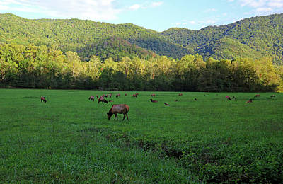 Whimsically Poetic Photographs Rights Managed Images - Elk Herd Smoky Mountains National Park Royalty-Free Image by Judy Vincent