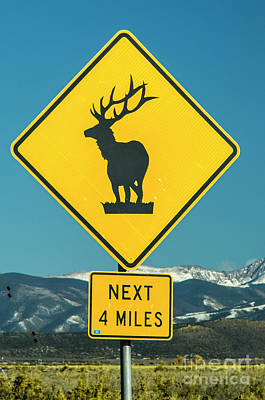 Photograph - Elk Warning Sign by Tim Mulina