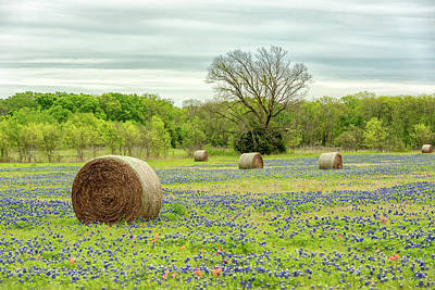 Photograph - Ellis County Bluebonnets  by Victor Culpepper