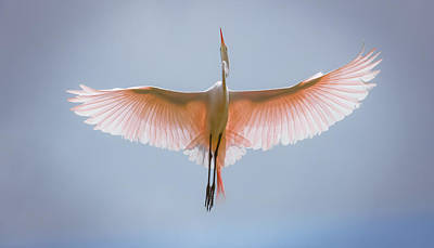 Photograph - Eloquence Of Freedom by Karen Wiles
